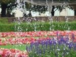 parc, flori, fantana